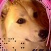 /~shared/avatars/30320500192746/avatar_1.img