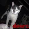 /~shared/avatars/48039471145352/avatar_1.img