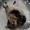 /~shared/avatars/58092642597324/avatar_1.img
