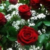 /~shared/avatars/62535922789524/avatar_1.img